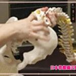 骨盤矯正などの技術習得